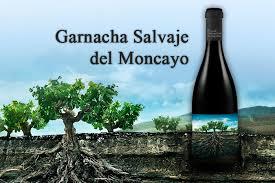 Winery arts moncayo garnacha